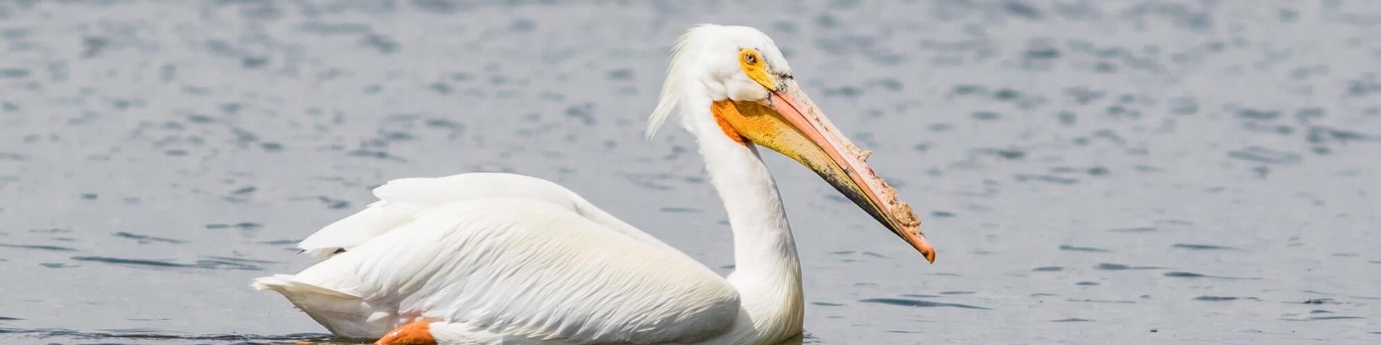 Birding Along Maryland's Coast